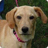 Adopt A Pet :: Clover  Got water? - Brattleboro, VT