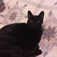 Adopt A Pet :: Oliver - Florence, AL