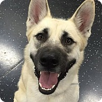 Adopt A Pet :: Jack - Mt. Clemens, MI