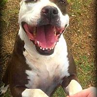 Adopt A Pet :: Carmen - Demopolis, AL