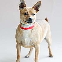 Adopt A Pet :: Vienna - Marietta, GA