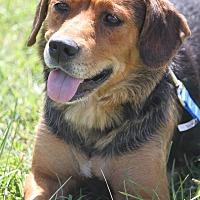 Adopt A Pet :: Patti - Staunton, VA