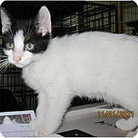 Adopt A Pet :: Kirby - Catasauqua, PA