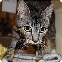 Adopt A Pet :: Fiona - Modesto, CA