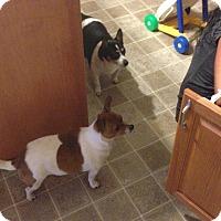 Adopt A Pet :: Ellie - Spring City, PA