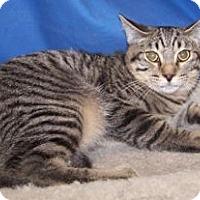 Adopt A Pet :: K-Stella2-Sarge - Colorado Springs, CO