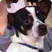 Adopt A Pet :: Rocky - Shawnee Mission, KS