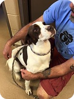 Pointer Mix Dog for adoption in Bellefontaine, Ohio - Issac