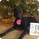 Adopt A Pet :: Max - Mandeville, LA