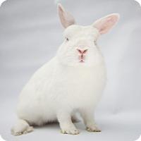 Adopt A Pet :: Tanya - Los Angeles, CA
