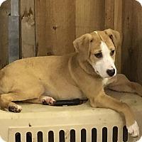 Adopt A Pet :: Obi - Redding, CA