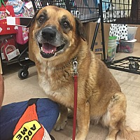 Adopt A Pet :: Shep (courtesy Lou) - Homestead, FL