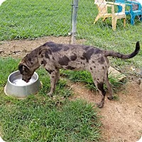 Adopt A Pet :: Hannah - Scottsboro, AL