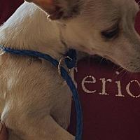 Adopt A Pet :: Paco - Pipe Creek, TX