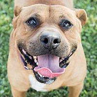Adopt A Pet :: Jasmine - Lockport, NY