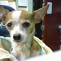 Adopt A Pet :: WILLIAM - Atlanta, GA