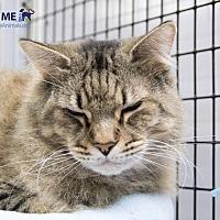Adopt A Pet :: Flint - Alexandria, VA