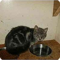 Adopt A Pet :: Vance - New Ringgold, PA