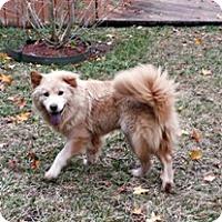 Adopt A Pet :: Hanna - Holland, MI