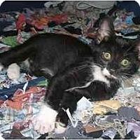 Adopt A Pet :: Righty - New York, NY