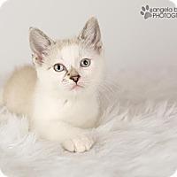Adopt A Pet :: Pearl - Eagan, MN