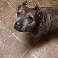 Adopt A Pet :: Pixie - Crestline, CA