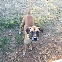 Adopt A Pet :: Gael W - Olympia, WA