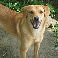 Adopt A Pet :: Ellen - Albany, NY