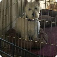 Adopt A Pet :: Sheena - Mesa, AZ