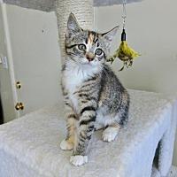 Adopt A Pet :: SUNKIST - Los Angeles, CA