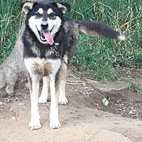 Adopt A Pet :: Aspen - Summer Shade, KY