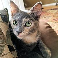 Adopt A Pet :: Beauty - Fredericksburg, VA