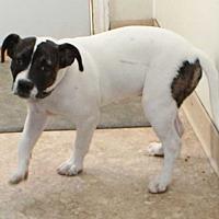 Adopt A Pet :: Kilo - Clear Lake, IA