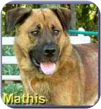 Shepherd (Unknown Type) Mix Dog for adoption in Aldie, Virginia - Mathis