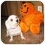 Photo 3 - Maltese Dog for adoption in North Benton, Ohio - Mandy