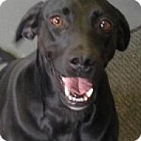 Adopt A Pet :: Chelsea - St. Louis, MO