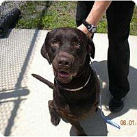 Adopt A Pet :: Apollo - Altmonte Springs, FL