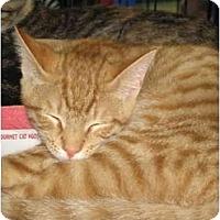 Adopt A Pet :: Sean (DH) - Little Falls, NJ