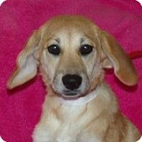 Adopt A Pet :: Dakota - Phillips, WI