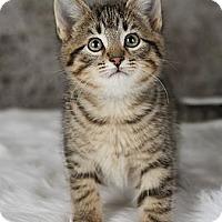 Adopt A Pet :: Carlisle - Eagan, MN