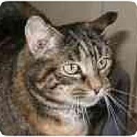 Adopt A Pet :: Tiger Lily - Pascoag, RI