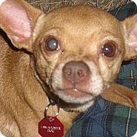 Adopt A Pet :: SANDER - Mahopac, NY