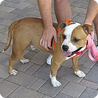 Adopt A Pet :: George - Scottsdale, AZ