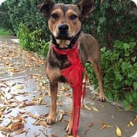 Adopt A Pet :: DOLLY - Irvine, CA
