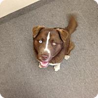 Adopt A Pet :: Fred The Dog - Phoenix, AZ