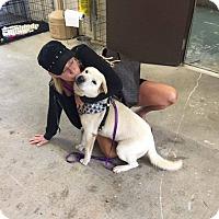 Adopt A Pet :: Polar in SC - pending - Mira Loma, CA