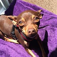 Adopt A Pet :: Lavender - Kirkland, WA