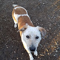 Adopt A Pet :: Jasper - Red Bluff, CA