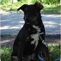 Adopt A Pet :: Lacy - Kingwood, TX