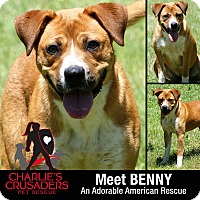 Adopt A Pet :: Benny - Spring City, PA